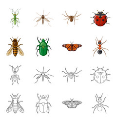 Isolated object of insect and fly sign collection vector