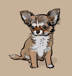 Little chihuahua dog puppy vector