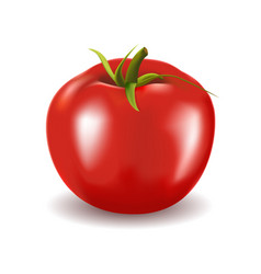 ripe red fresh tomato isolated on white background vector image