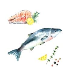 Watercolor salmon vector image