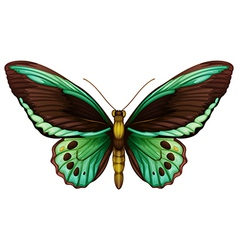 Common green birdwing vector image vector image
