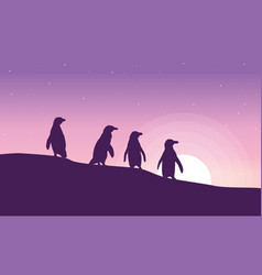 At sunrise penguin silhouette scenery vector
