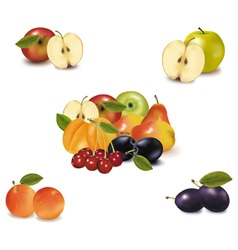 big group with six fruit vector image
