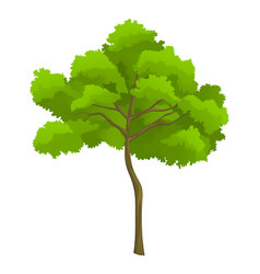 cartoon green tree isolated at vector image
