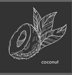half of natural coconut with small palm leaves vector image