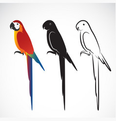 Parrot macaws on white background wild vector