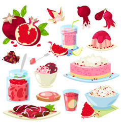 Pomegranate fresh fruity food dessert ice vector