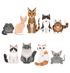 set many different kittens vector image