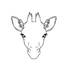 Sketch giraffes head portrait forest animal vector