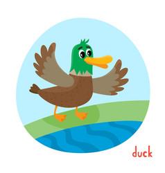 wild bird duck in cartoon style isolated on white vector image