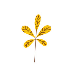 yellow autumn chestnut leaf isolated on white vector image