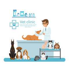 animals in cabinet of vet hospital vector image vector image