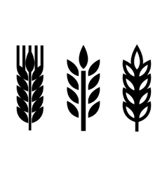 black wheat ear spica icons set vector image vector image