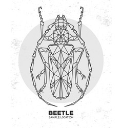 abstract polygonal triangle longhorn beetle vector image