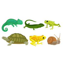 Cold-blooded animals amphibians and reptiles vector