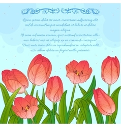 Floral card with tulips on blue background vector image