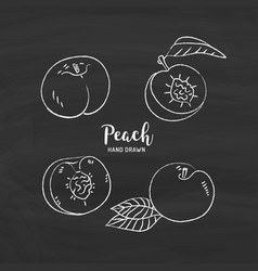 peach fruit drawing peach fruit cut in half with vector image