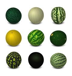 Different Varieties of Watermelons vector image vector image