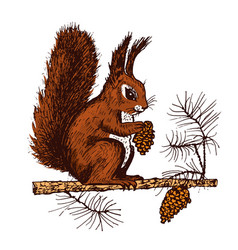 Christmas squirrel and animal with fir-cone in the vector