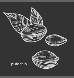 Delicious pistachio in shell with couple of leaves vector