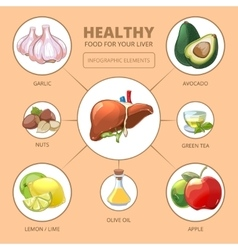 Healthy foods for liver Medical health vector image