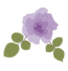single dark purple rose flower with green leaves vector image