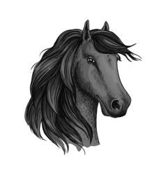 Sketched head of mustang or horse stallion vector