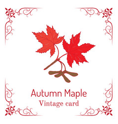 autumn maple branch with leaves and seeds vintage vector image vector image
