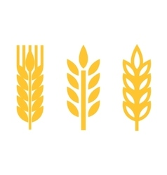 yellow wheat ear spica icons set vector image