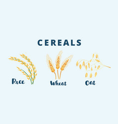 cereal ears different type vector image