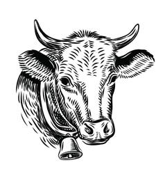 cow black head vector image