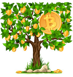 bitcoin grows on the tree vector image vector image