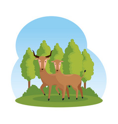 African antelopes couple in the savannah vector