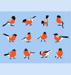 bullfinches isolated on white background vector image