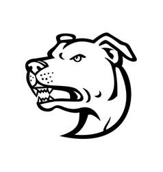 American staffordshire terrier head mascot black vector