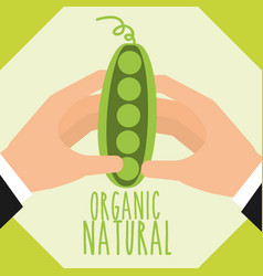 Food organic nature vector