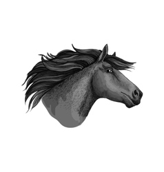 Mustang horse or stallion head sketch vector