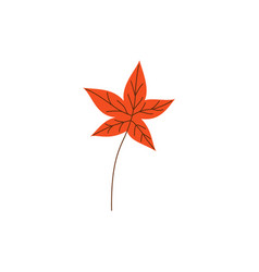 orange autumn maple leaf isolated on white vector image