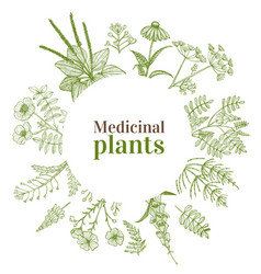 Round template with medicinal plants in hand-drawn vector