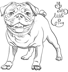 Sketch cute dog black pug breed vector