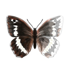 Butterfly Brintesia Circe vector