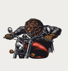 Concept aggressive bear head motorcyclist vector
