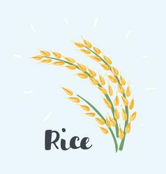 Ears rice on white vector