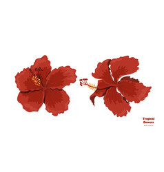 Isolated tropical flowers hibiscus image vector