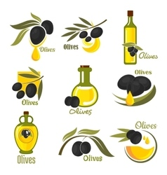 Olive fruits with leaves and oil bottles vector
