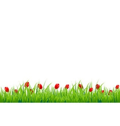 Red Tulip Border vector
