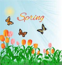 Spring blossoms tulips and butterflies vector image