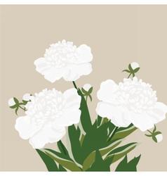 Vintage Watercolor peony flowers vector image vector image