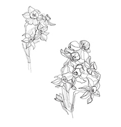 Small iris flowers vector image