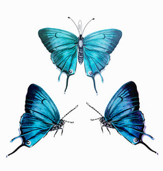 collection hand drawn realistic butterflies vector image